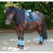 Shetland - Pony (9)